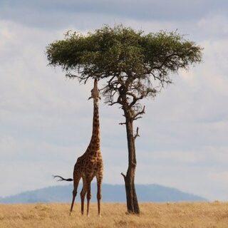 Tourist Attraction in Kenya